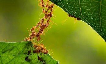 Karınca İle Nasıl Mücadele Ederim?